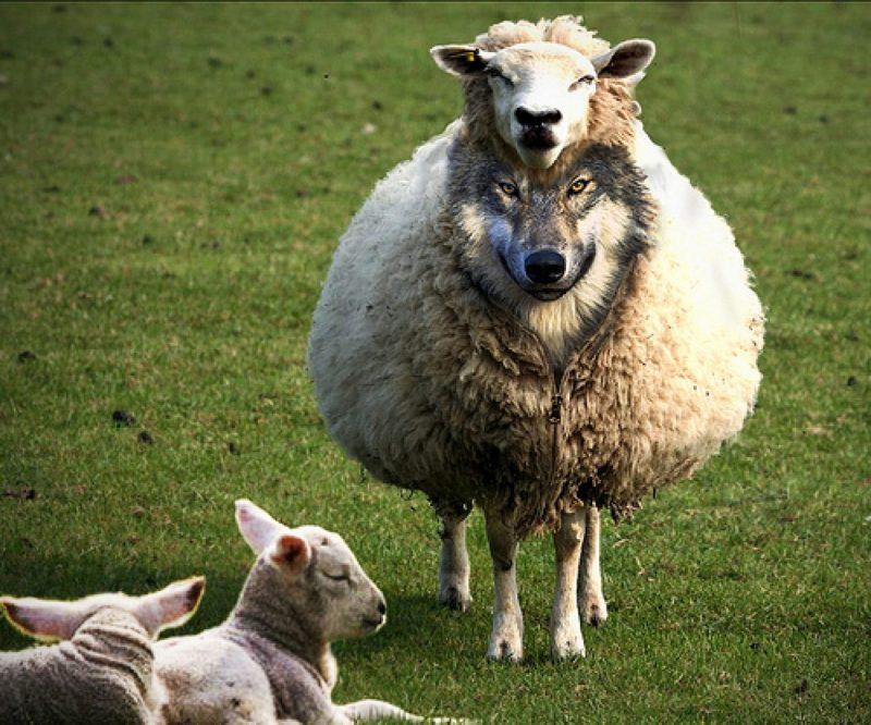 wolf-in-sheepskin-767x639@2x